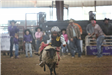 Kid doing Mutton Busting