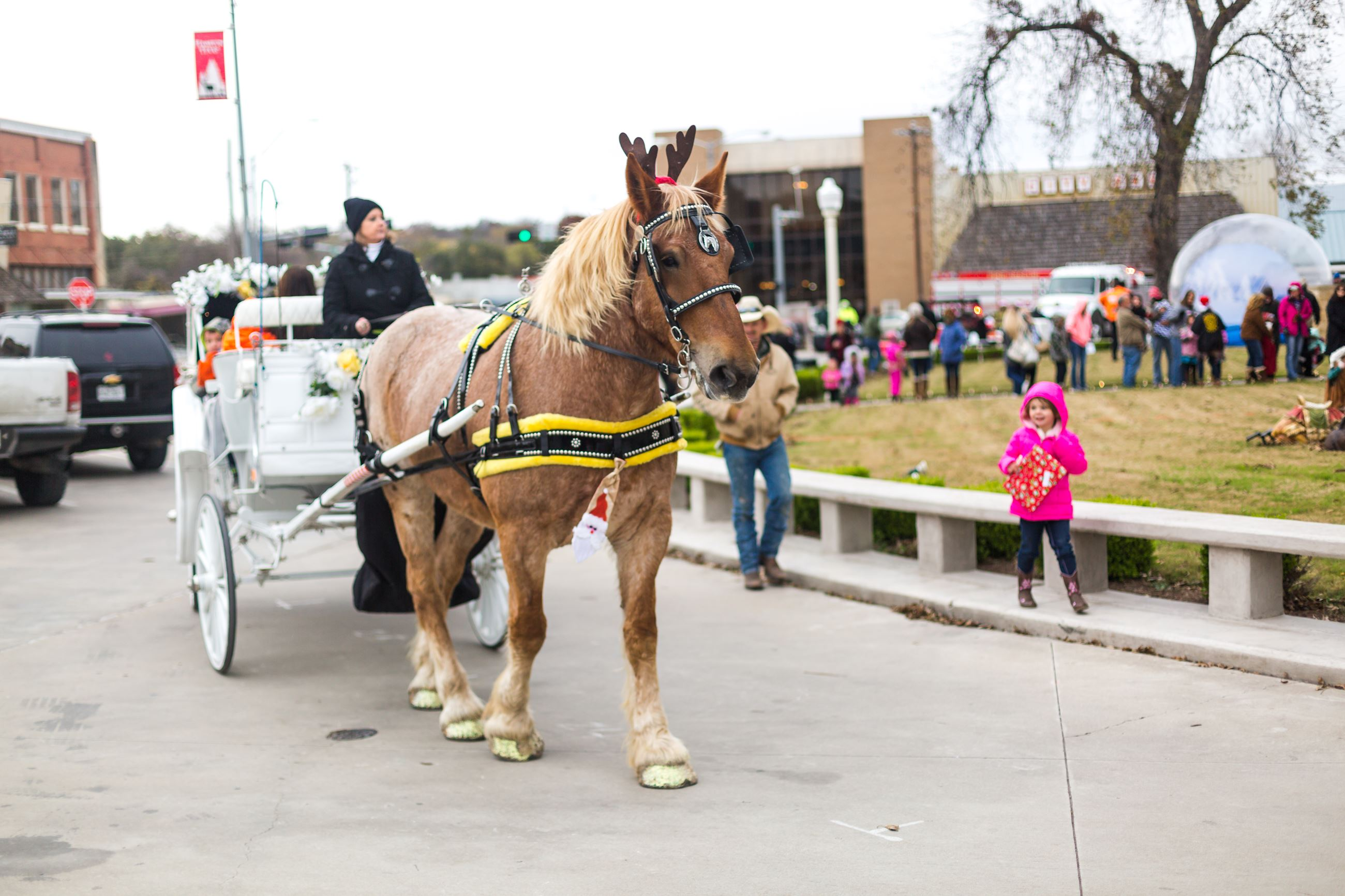 Horse pulling a carriage during Christmas on the Square